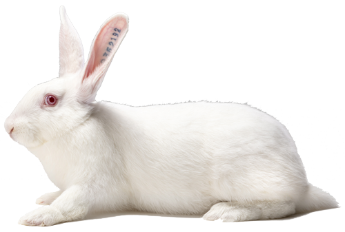 reproducteur lapin femelle PS Hyla Optima
