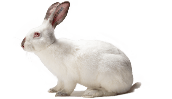 femelle lapin reproductrice Hyplus optima
