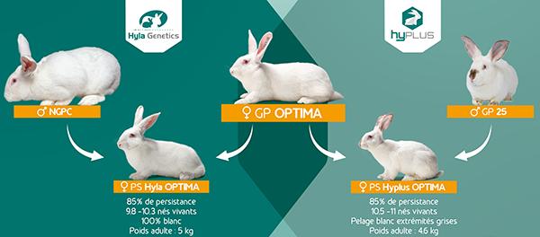 Femelles Hyplus et Hyla OPTIMA : résultats essais femelles PS